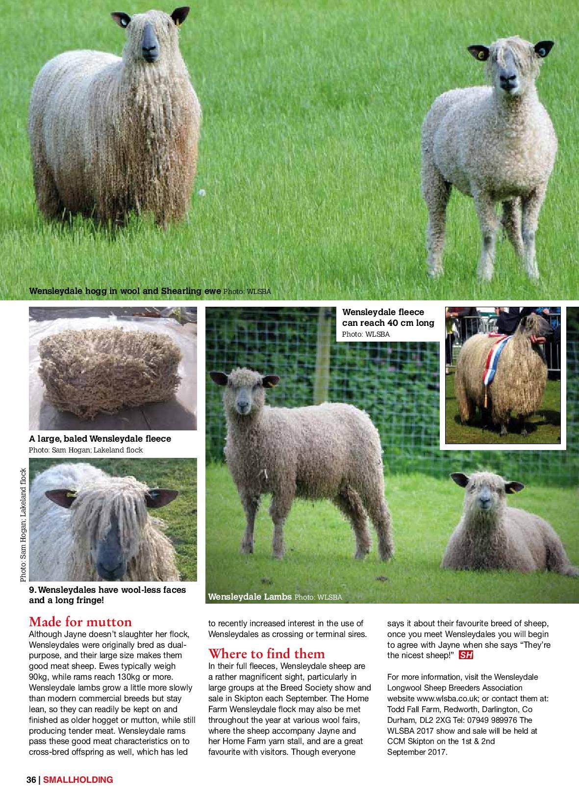Wensleydale Sheep - Wensleydale Longwool Sheep Breeders' Assoication